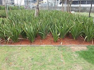 Sistema de Gotejamento Irrigação
